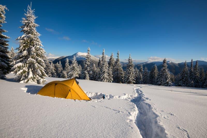 Żółty namiot i karple stoimy przy wysokogórską łąką zdjęcie royalty free