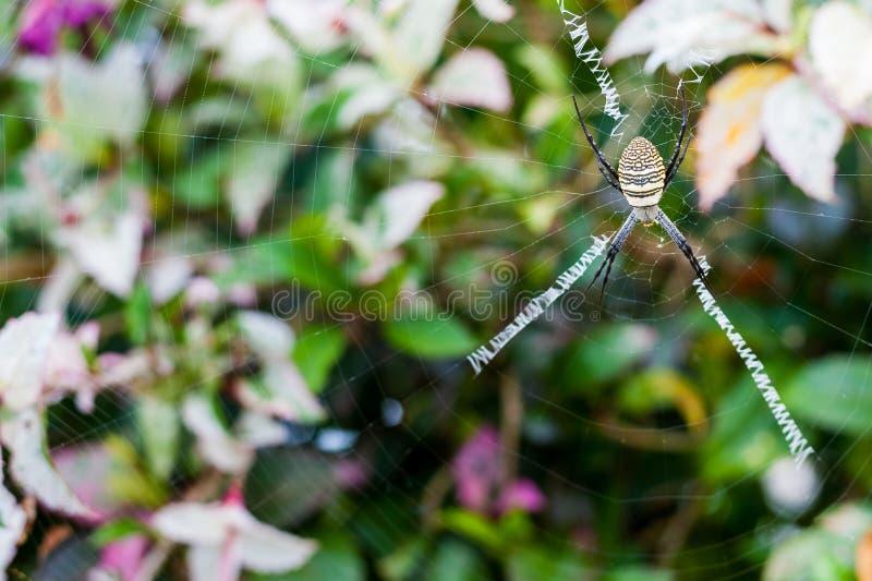 Żółty Ogrodowy pająk zdjęcie royalty free