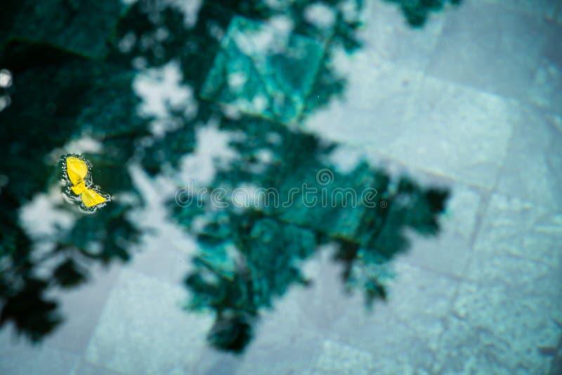 Żółty płatek na wodzie fotografia stock