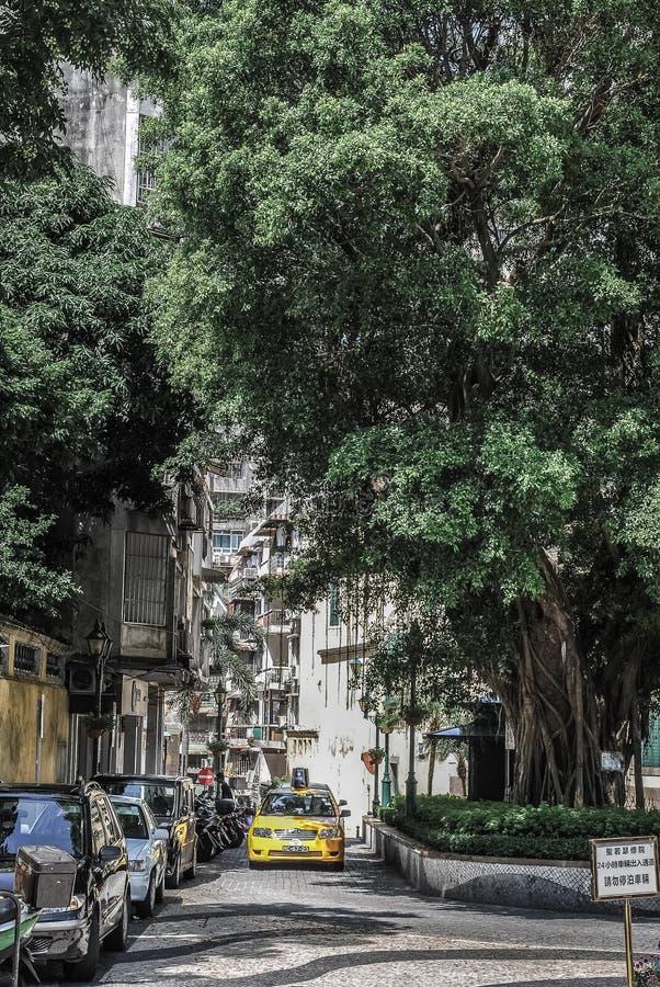 Żółty taxi przybycie pod Wielkim drzewem zdjęcie royalty free