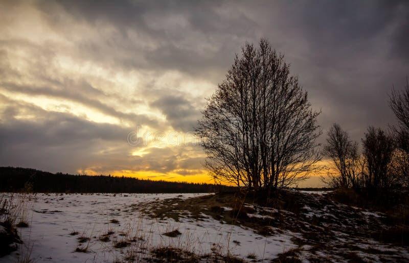 Żółty zima zmierzch nad śnieżnym polem z drzewami fotografia royalty free