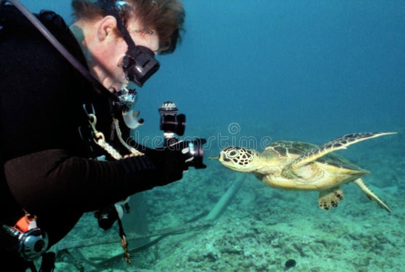Żółw ciekawość - Podwodny fotograf zdjęcie stock