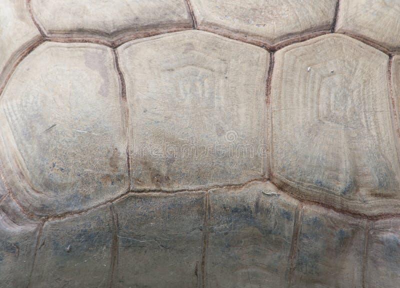 Żółw tekstura zdjęcia royalty free