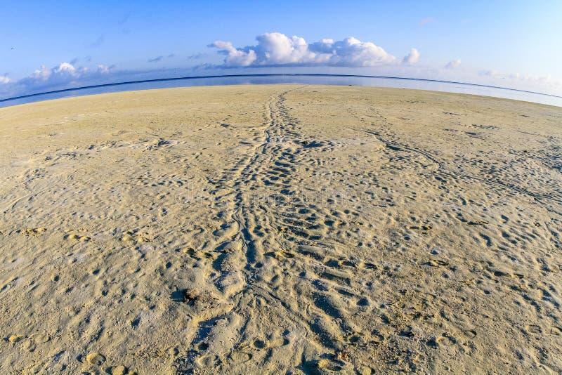 Żółw tropi na plaży, Czaplia wyspa, Queensland, Australia fotografia stock