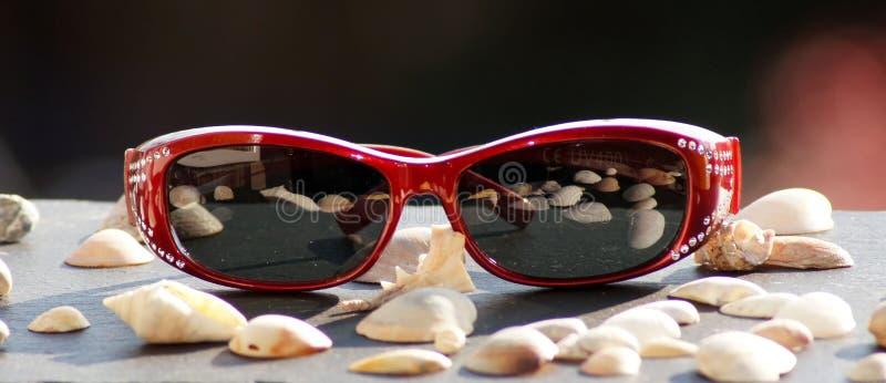Óculos de sol na luz solar para a mulher foto de stock royalty free