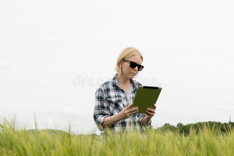 Óculos de sol vestindo da mulher e olhar fixamente em uma tabuleta no campo de trigo imagem de stock royalty free