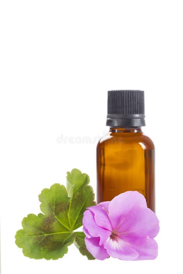 Óleo de gerânio essencial na garrafa e nas flores fotos de stock royalty free