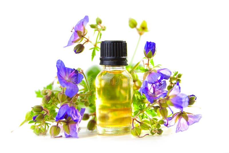 Óleo essencial do gerânio do prado na garrafa bonita no fundo branco imagem de stock