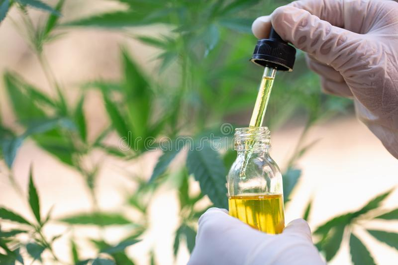 Óleo na folha do cânhamo da mão do doutor, medicina médica do cannabis da marijuana imagens de stock