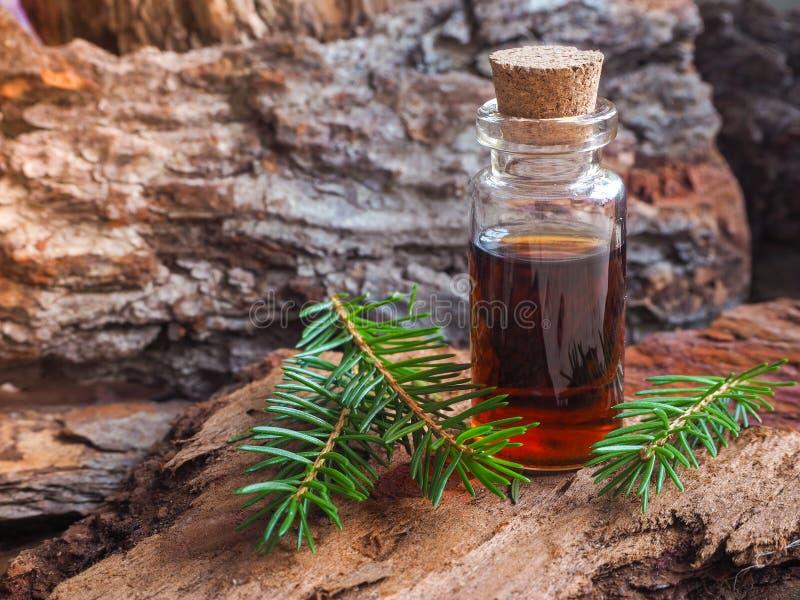 Óleo natural do abeto em uma mini garrafa Um óleo da massagem imagem de stock royalty free