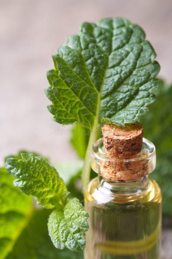 Óleos aromáticos do erva-cidreira em uma garrafa de vidro imagem de stock royalty free