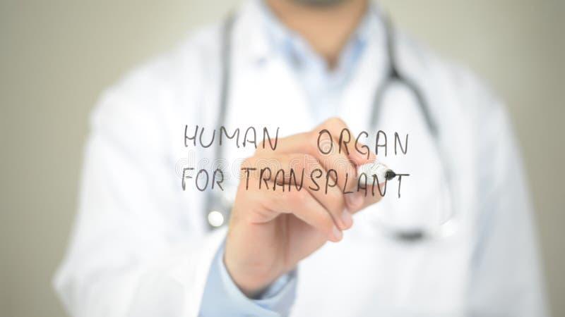 Órgão humano para a transplantação, escrita do doutor na tela transparente imagens de stock