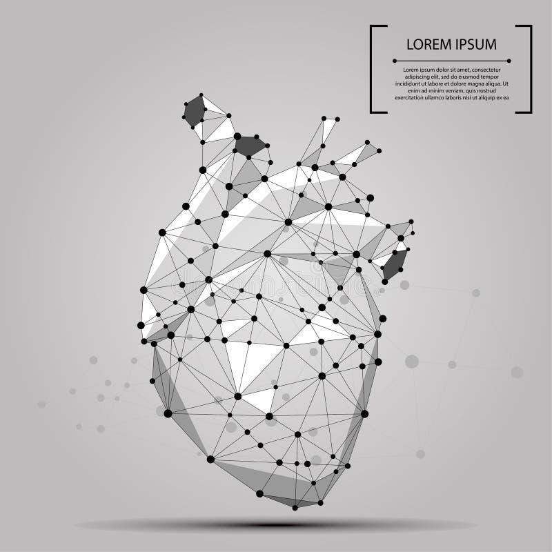 Órgão interno poligonal abstrato do coração humano da linha e do ponto ilustração stock