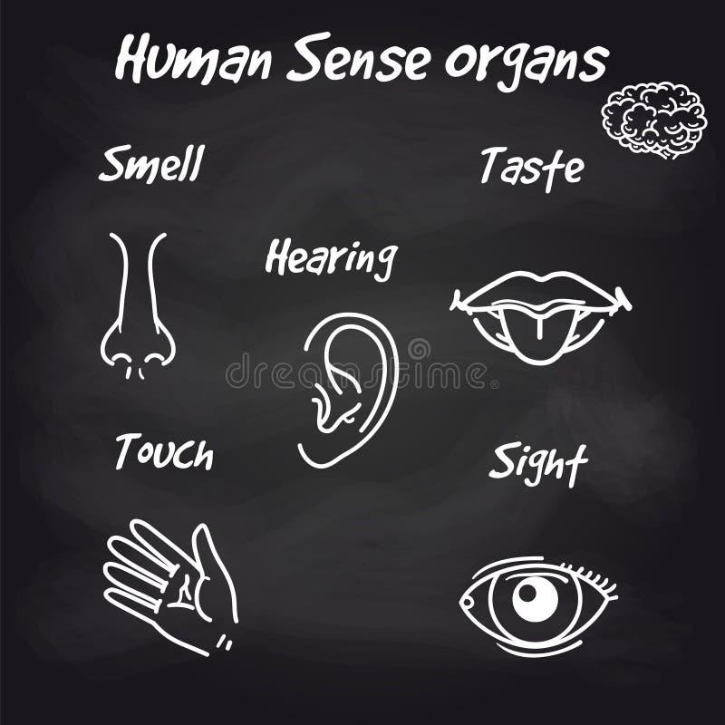 Órgãos de sentido humanos no fundo do quadro ilustração do vetor
