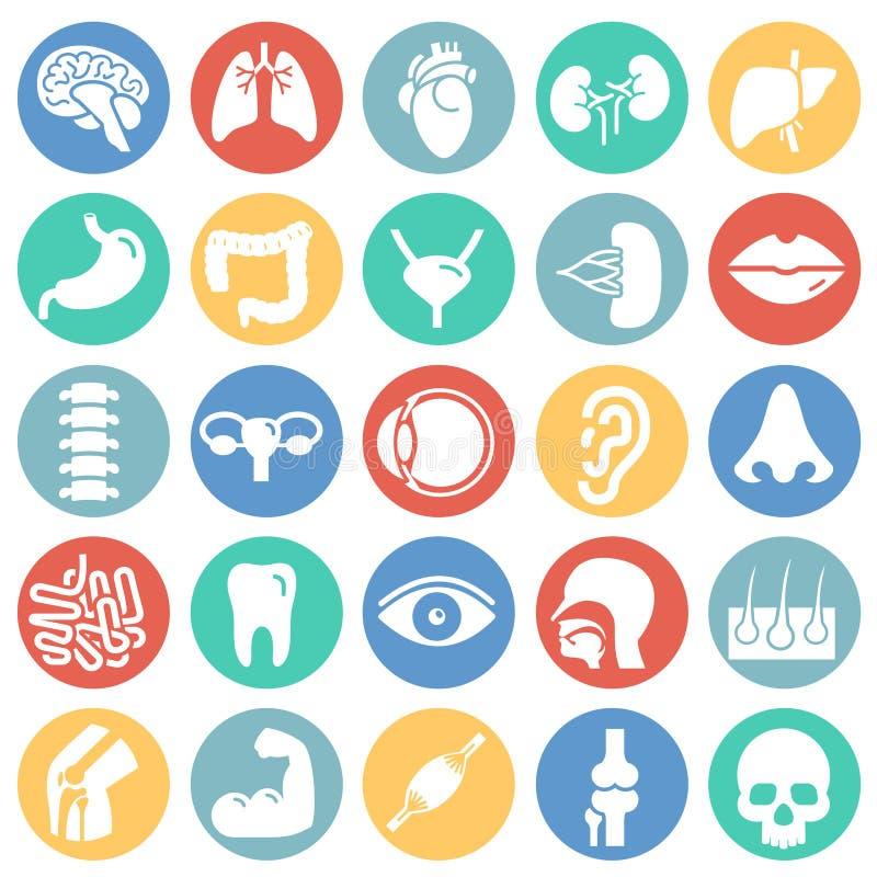 Órgãos humanos ajustados no fundo branco dos círculos de cor para o gráfico e o design web, sinal simples moderno do vetor Concei ilustração stock
