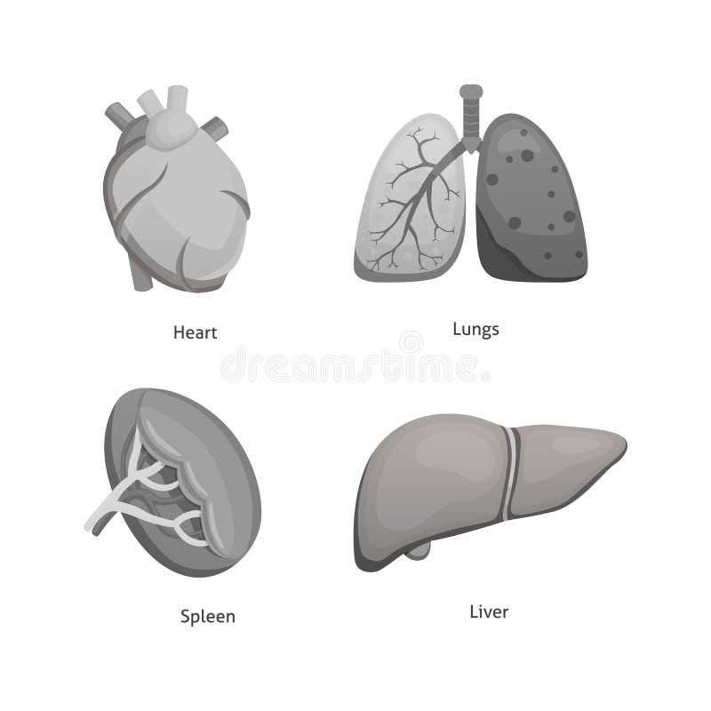 Órgãos humanos dos desenhos animados ajustados Anatomia de ilustrações dos desenhos animados do vetor do corpo ilustração royalty free