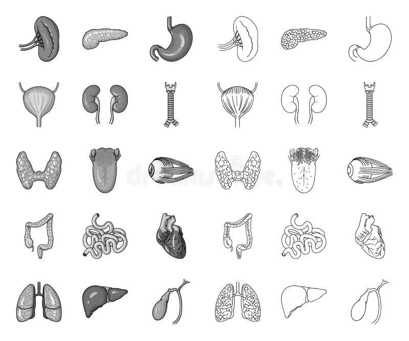 Órgãos humanos mono, ícones do esboço em coleção ajustada para o projeto A anatomia e os ?rg?os internos vector a Web conservada  ilustração royalty free