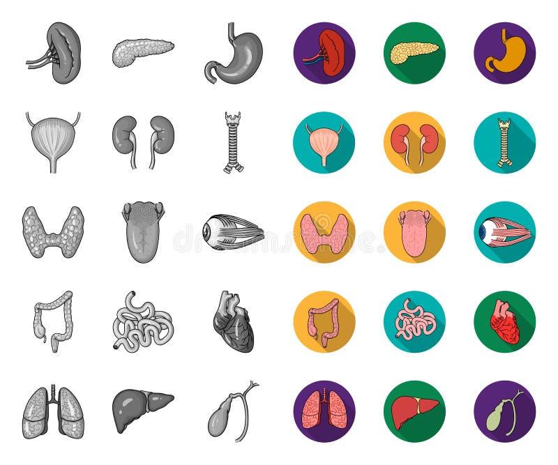 Órgãos humanos mono, ícones lisos em coleção ajustada para o projeto A anatomia e os ?rg?os internos vector a Web conservada em e ilustração do vetor