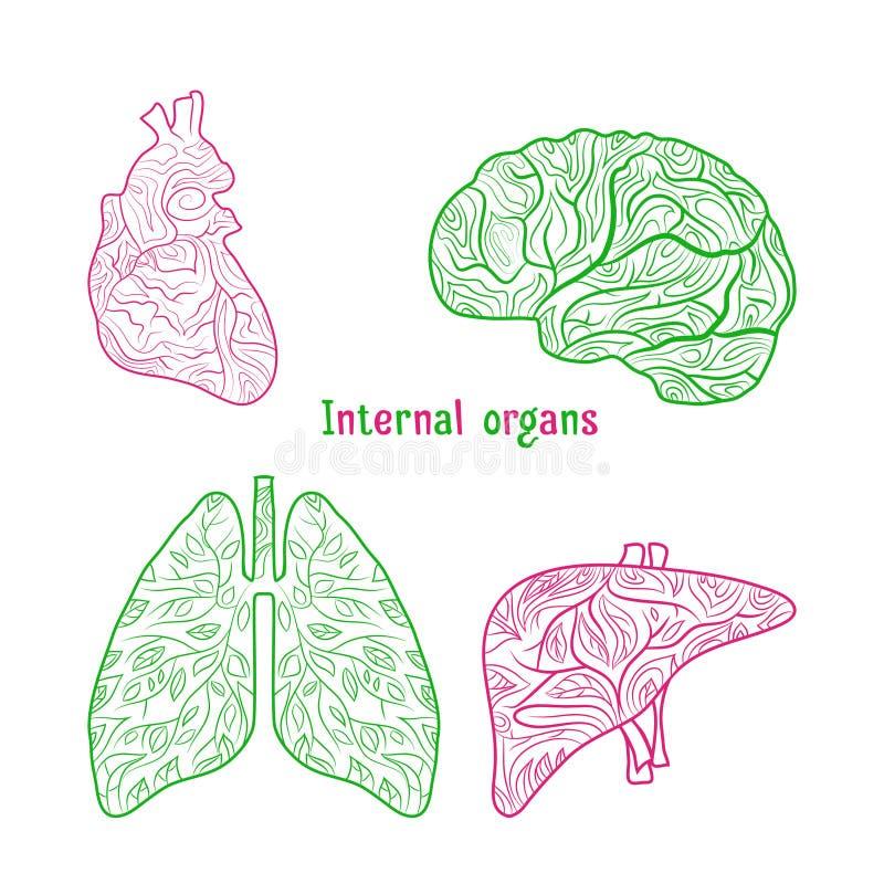 Órgãos internos tirados mão fotografia de stock