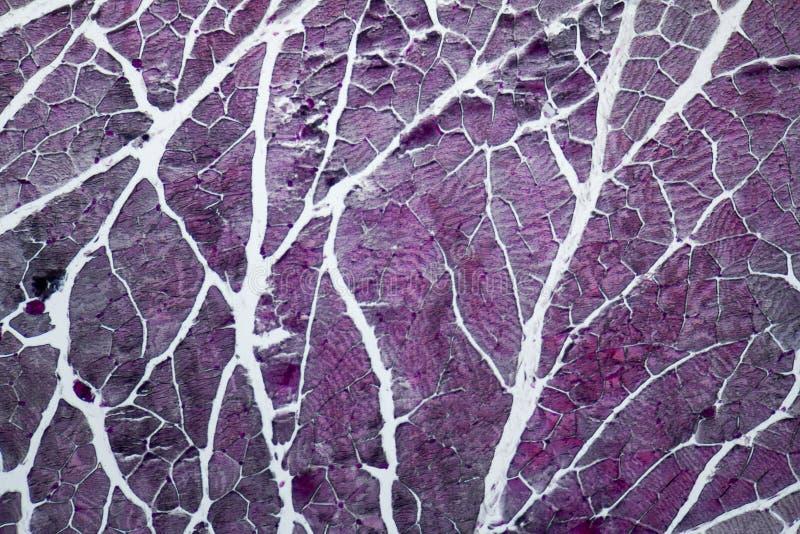 Órgãos microscópicos do pescoço imagens de stock royalty free
