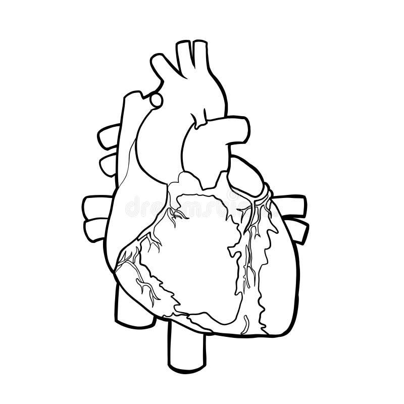 Órgano stock de ilustración. Ilustración de gráfico, biología - 37986635