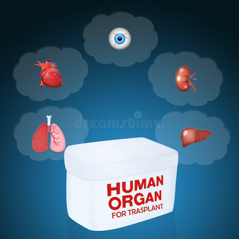 Órgano humano para trasplant stock de ilustración