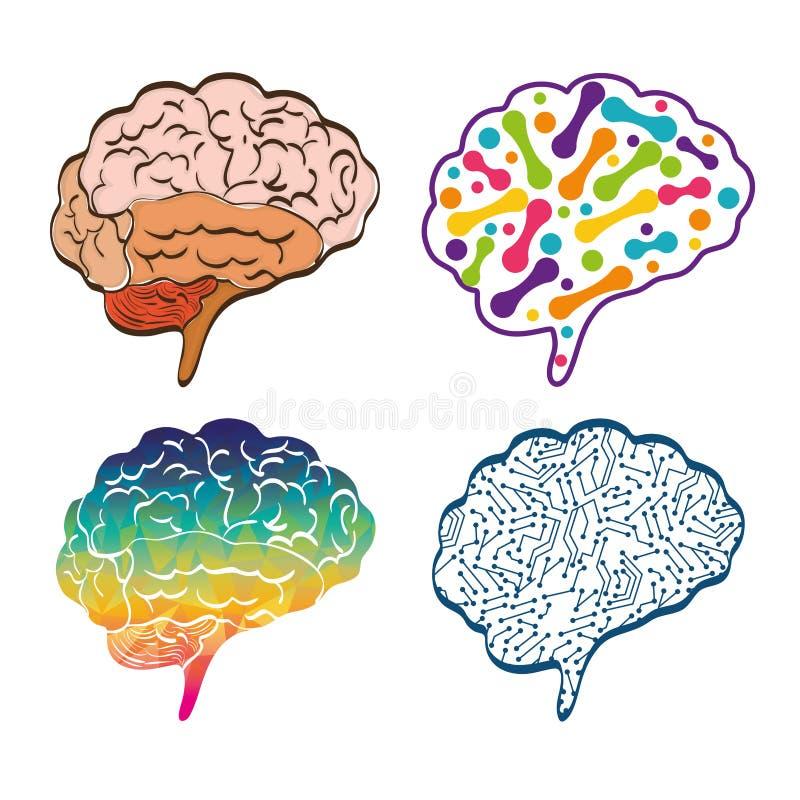 Órgano Humano Sistema Del Icono Del Cerebro Gráfico De Vector ...