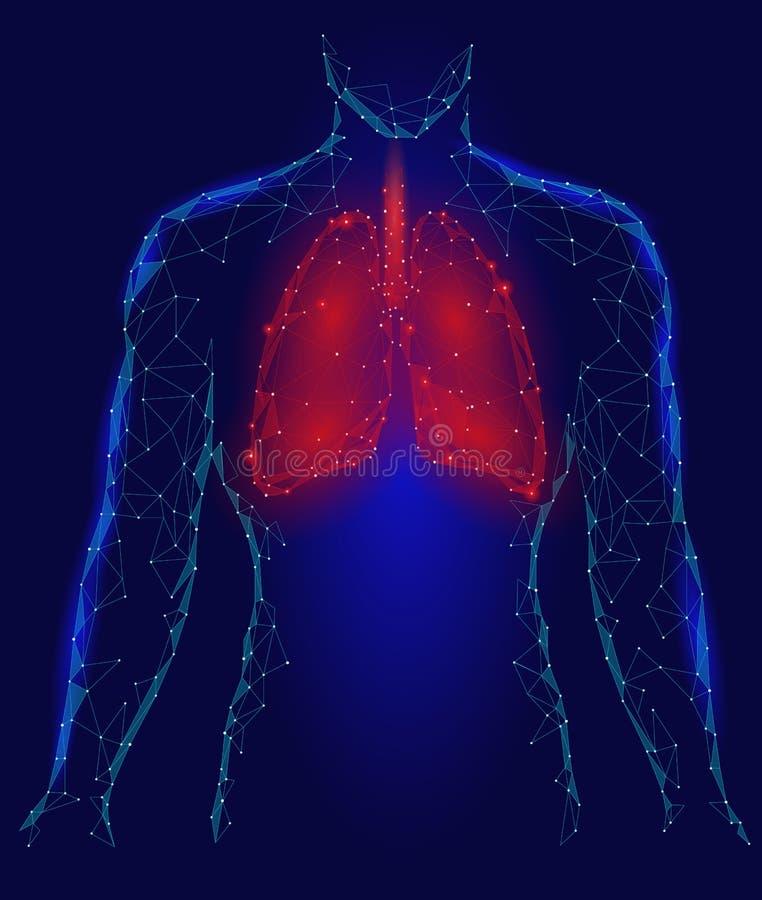 Órgano Interno De La Infección Pulmonar Humana De Los Pulmones ...