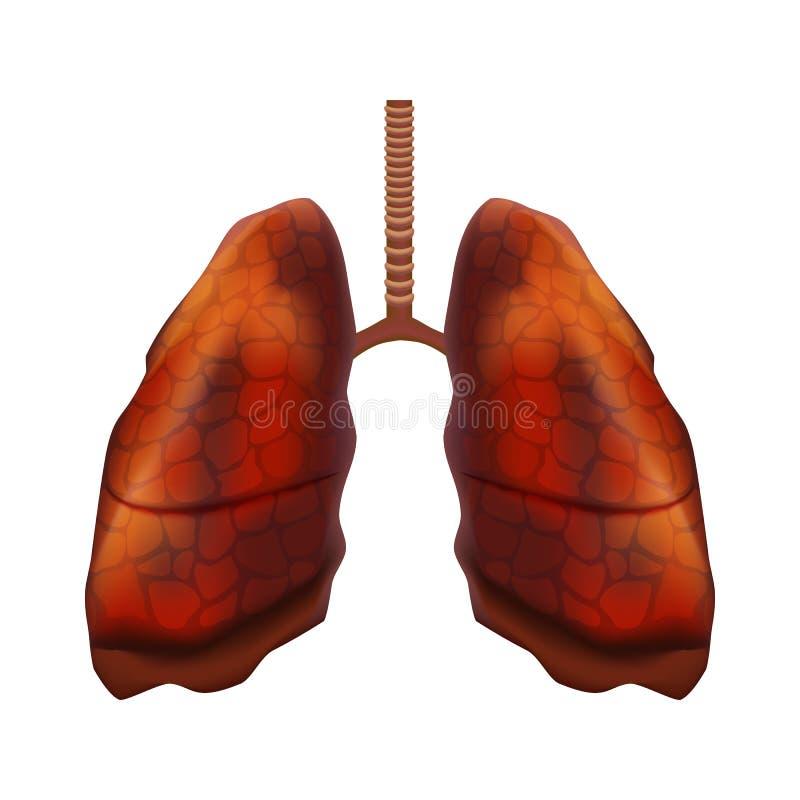 Órgano interno de los pulmones humanos detallados realistas 3d Vector libre illustration