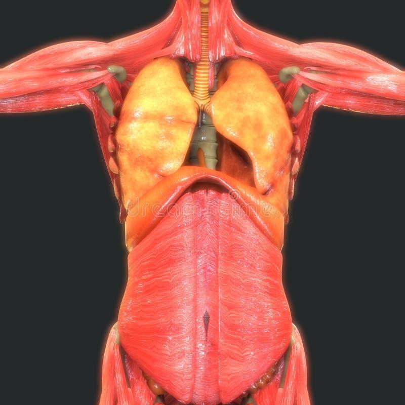 Asombroso Tarsal Anatomía Placa Embellecimiento - Imágenes de ...
