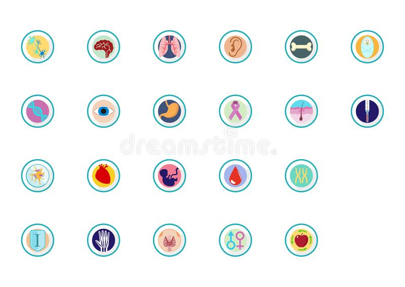 Órganos e iconos e infographics del cuerpo stock de ilustración