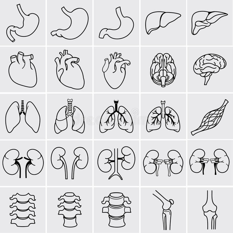 Órganos humanos libre illustration
