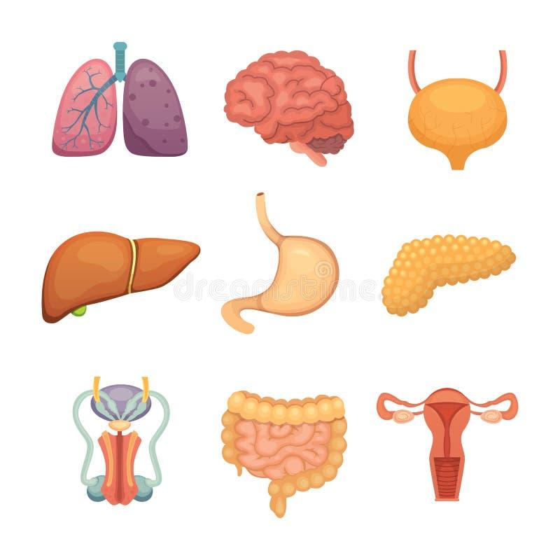 Único Ejemplos Anatomía Comparada Galería - Anatomía de Las ...
