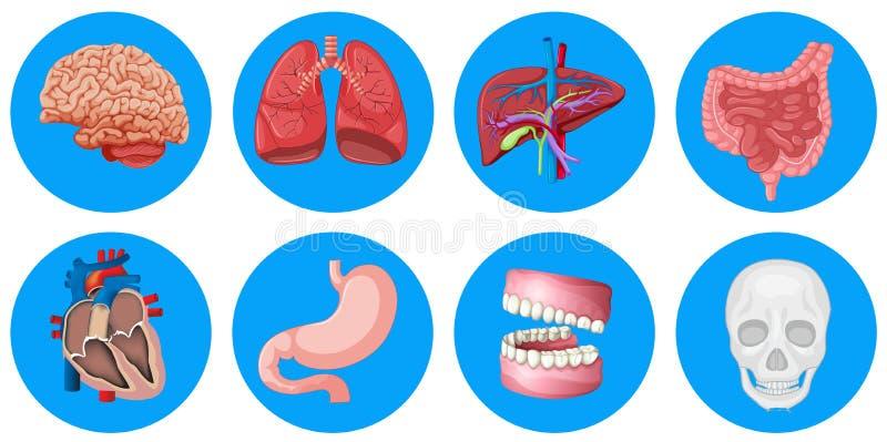 Órganos humanos en insignia redonda stock de ilustración