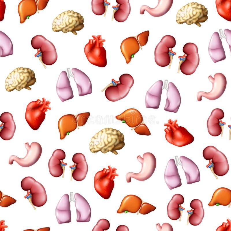 Órganos humanos internos, modelo inconsútil libre illustration
