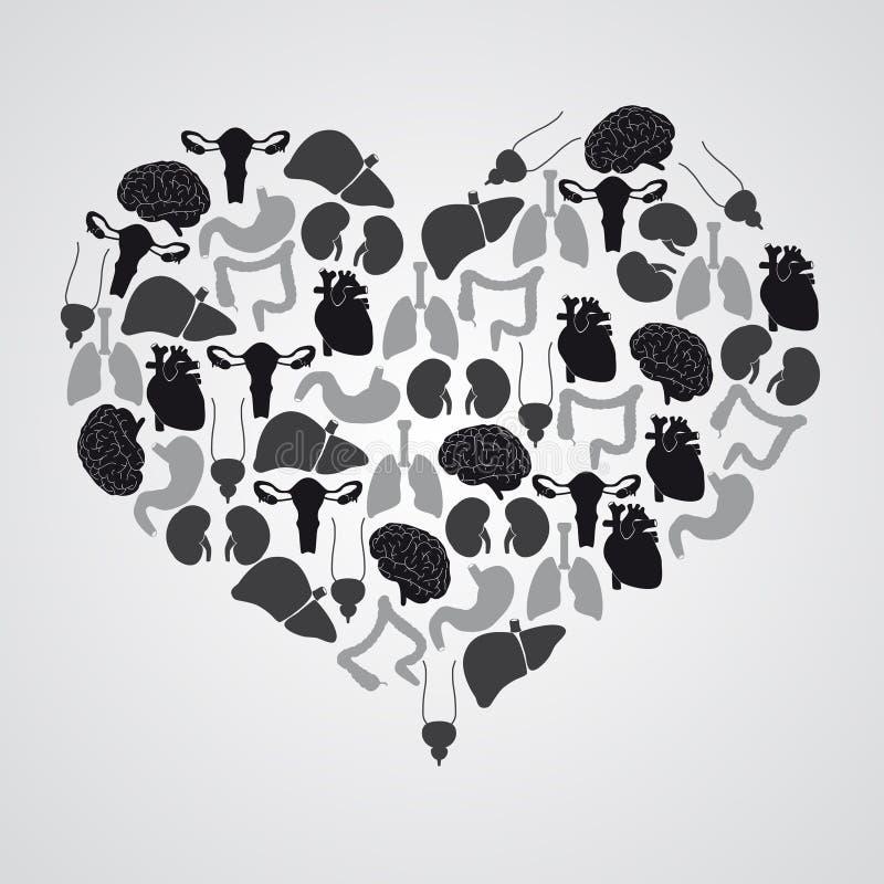 Órganos Internos Del Cuerpo Humano En Forma Del Corazón Ilustración ...
