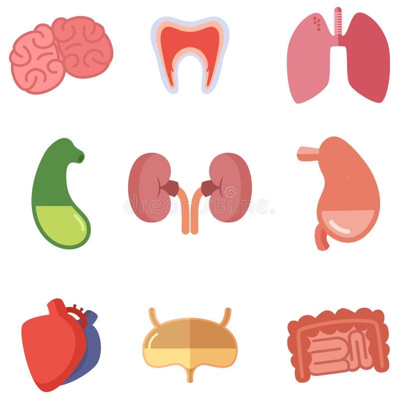Órganos internos humanos en el fondo blanco Iconos del vector fijados en estilo de la historieta ilustración del vector