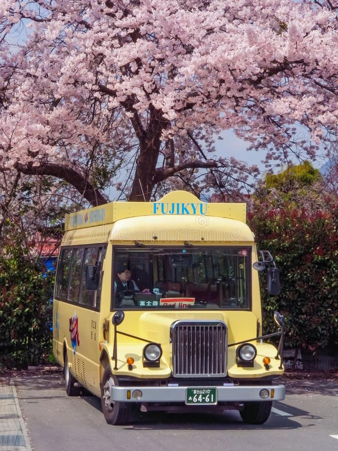 Ônibus amarelo local japonês Fujikyu na estação do lago Kawaguchi que negligencia por uma árvore cor-de-rosa das flores de cereje fotos de stock royalty free