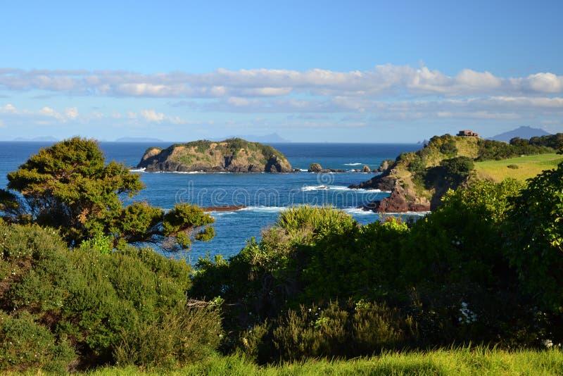 Ö-, havs- och skogkust, Nya Zeeland royaltyfria bilder