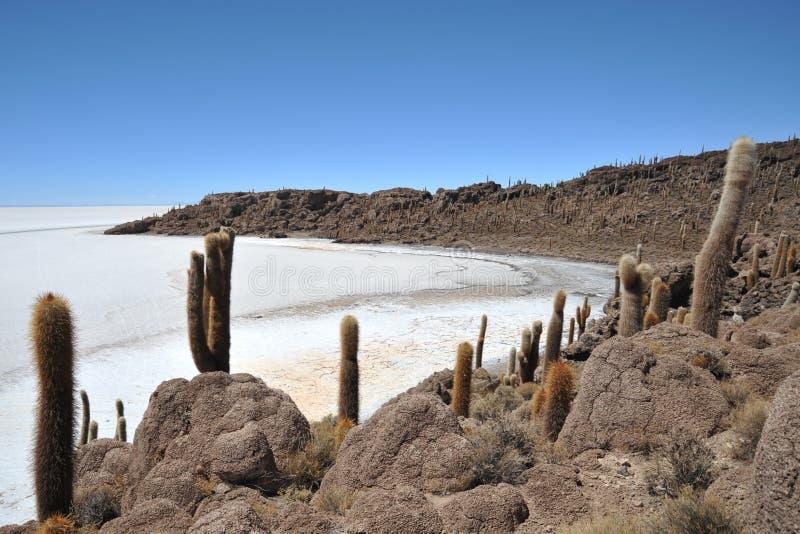 Ö Incahuasi Salar de Uyuni, Bolivia arkivbilder