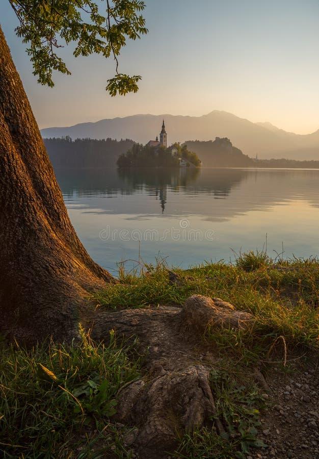 Ö med kyrkan i den blödde sjön, Slovenien på soluppgång royaltyfri foto