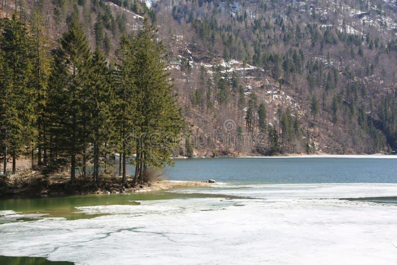 Ö med trädet på den med is alpina sjön arkivfoton