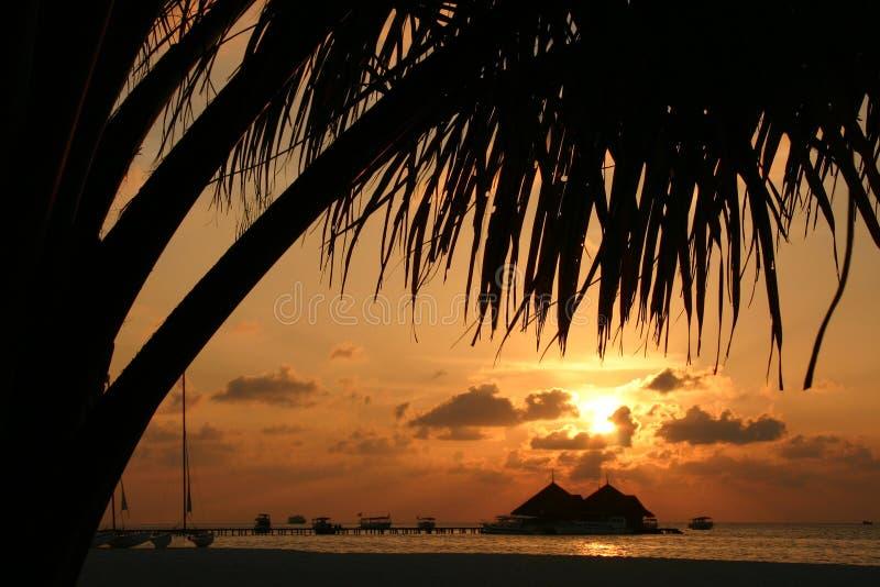 öar maldives arkivfoto
