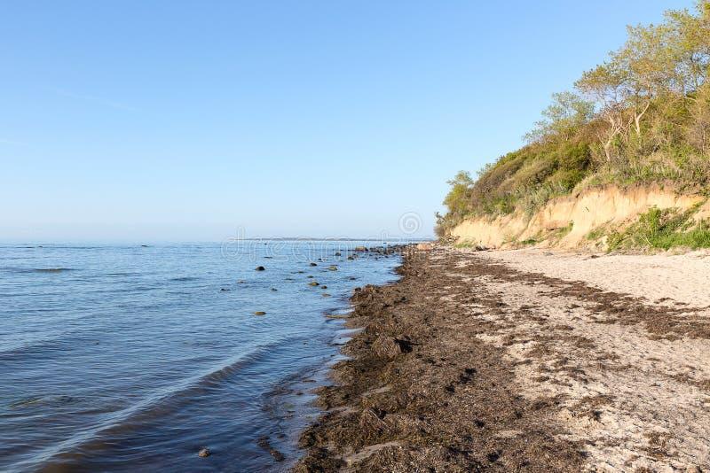 Öde Östersjön strand med klippor och havsväxt, Gollwitz, Poe arkivfoton