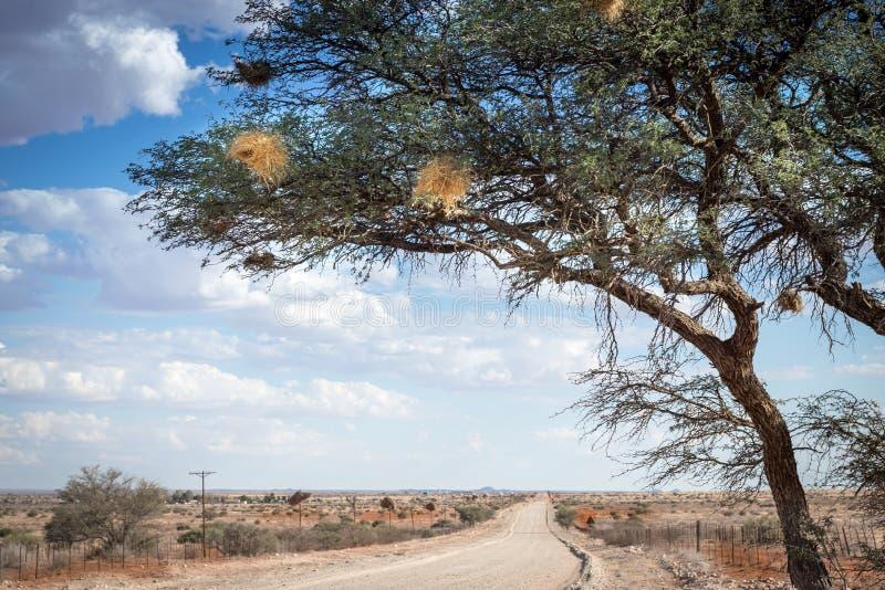 Öde grusväg i karooen/Kalaharien royaltyfria foton