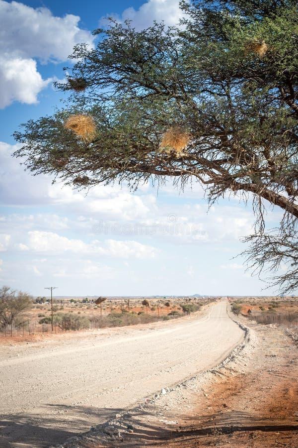 Öde grusväg i karooen/Kalaharien arkivfoto