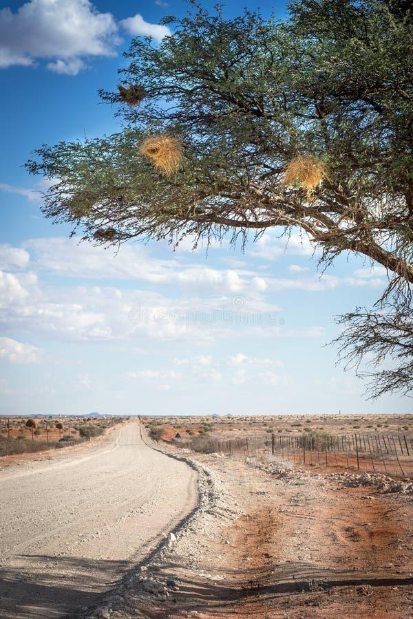 Öde grusväg i karooen/Kalaharien fotografering för bildbyråer