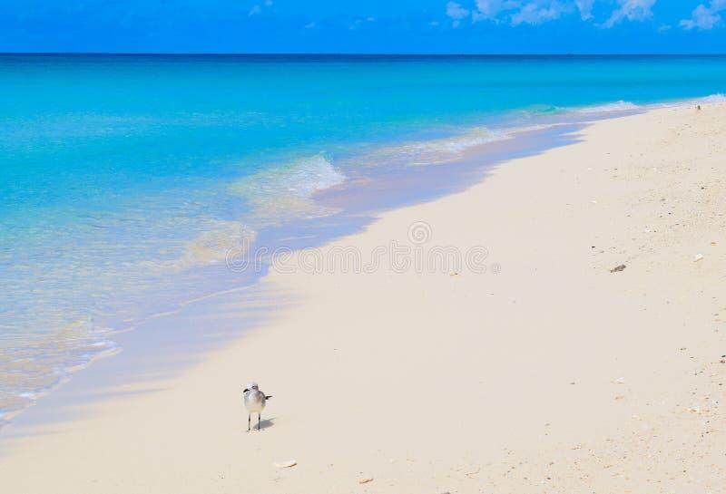 Öde karibisk strand på Bimini, Bahamas royaltyfri fotografi