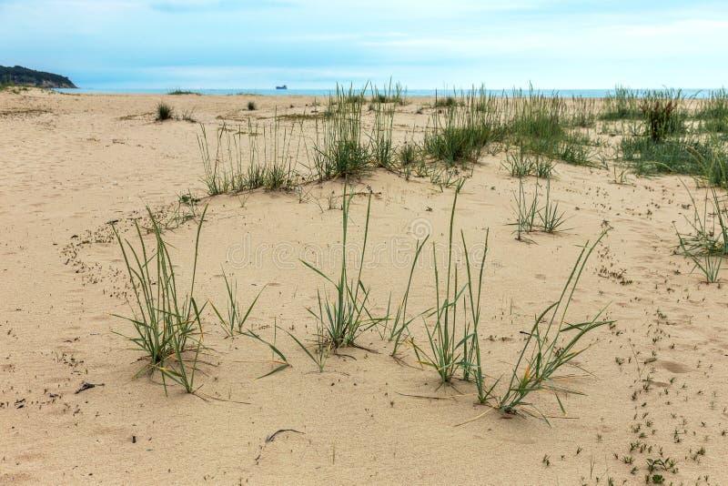 Öde lös strand utan folk Härlig lös strand med cl royaltyfri bild