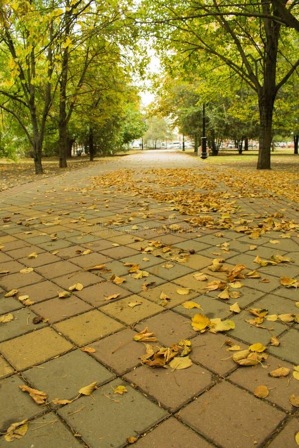 Öde parkera i höst royaltyfri fotografi